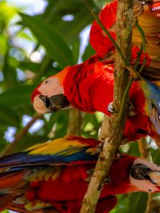 Relâche scolaire au Riu Guanacaste, Costa Rica
